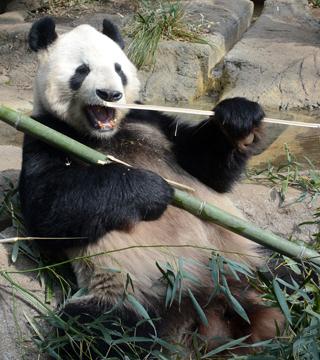 上野動物園 再開