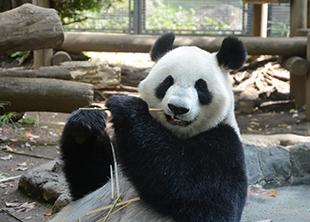 パンダプロフィール 上野動物園のジャイアントパンダ情報サイト「UENO ...